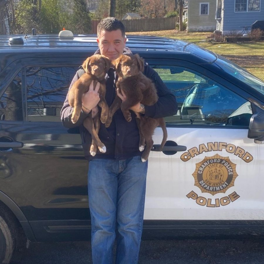 """""""How we help dogs- and how our town is becoming apart of it"""""""
